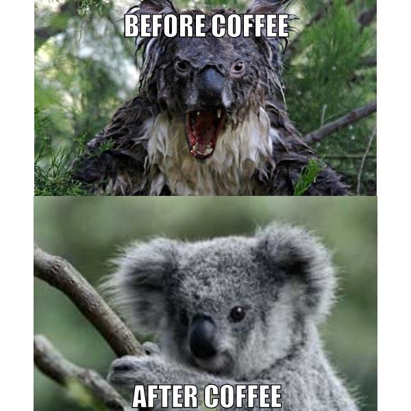 evil koala meme - Google Search