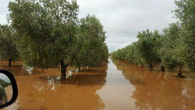 Pioggia agricoltura in ginocchio Cia Puglia: Subito la conta dei danni