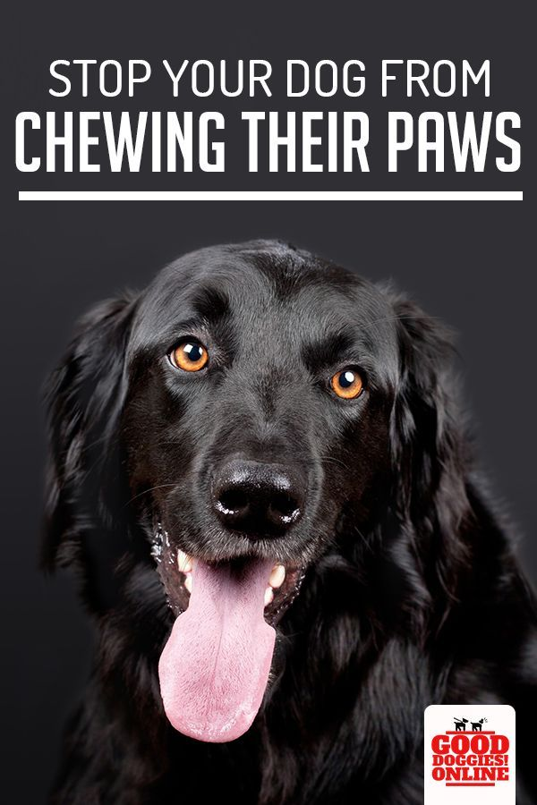 5 Ways How To Stop A Dog From Chewing Paws Diabetic Dog Dog