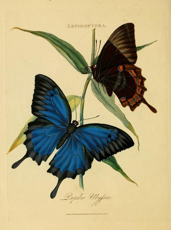 An epitome of the natural history of the insects of India : - Biodiversity Heritage Library 562 x 755