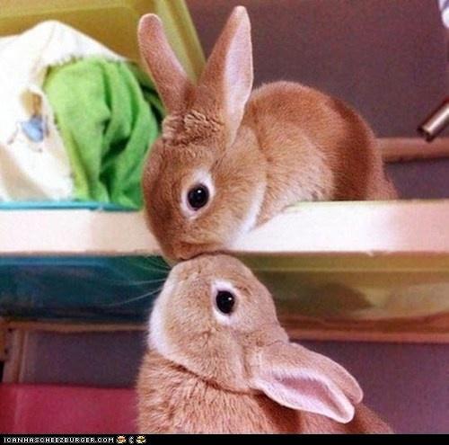 bunnies @_@: Rabbit, Cuteness, Animals, Sweet, Pet, Things, Bunnies
