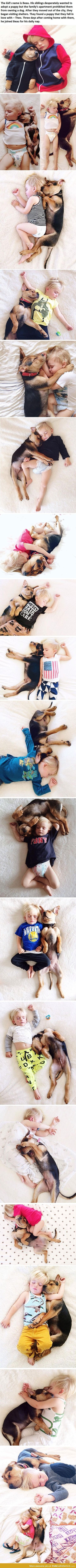 This is the most adorable thing I have ever seen.