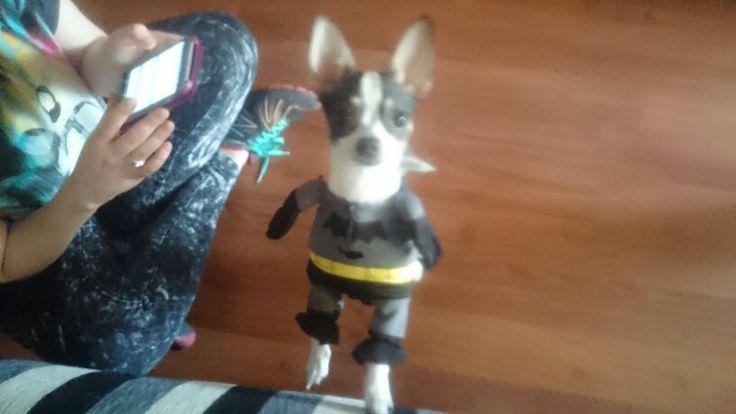 Lola - Batman