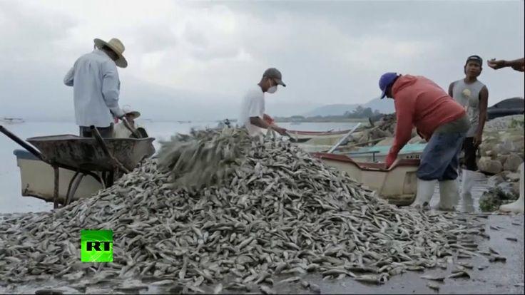 Video: Aparecen más de 50 toneladas de peces muertos en una laguna de Mé...