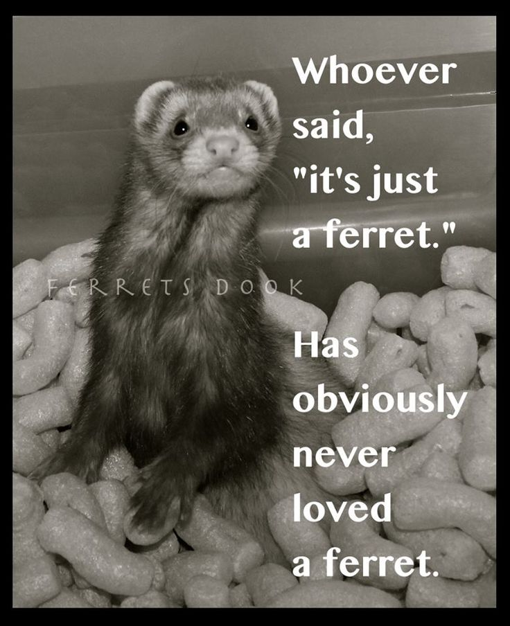 Please answer! How can I ask my mom for a ferret?!?