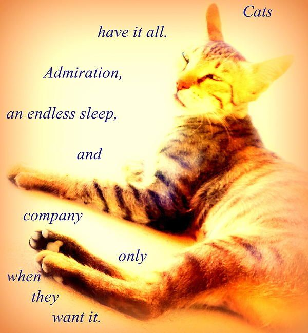 Cats Have It All