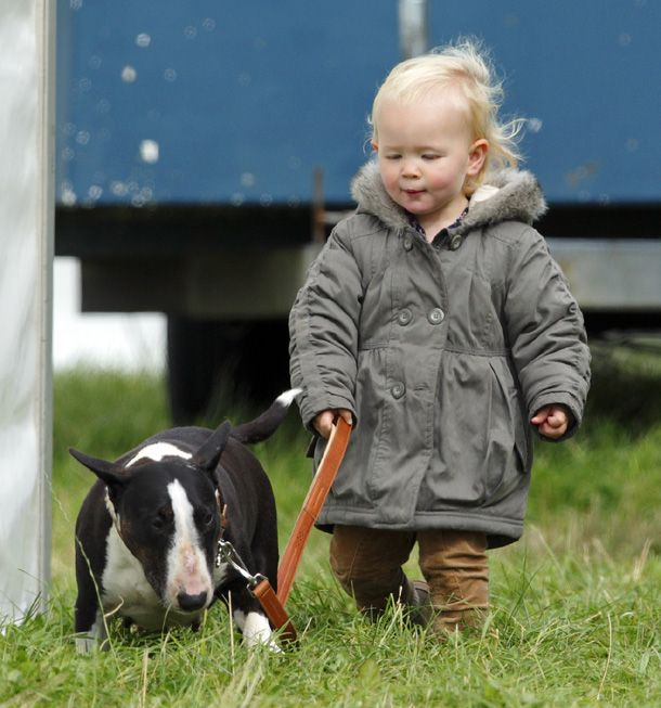 September 17, 2012: Savannah Phillips, daughter of Peter and Autumn Phillips, looks confident as she took the lead of a bull terrier at Gatcombe Park.