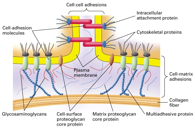 Complexity of Cells