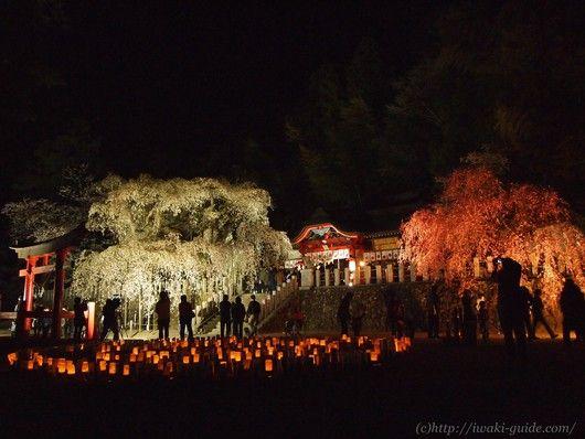 小川諏訪神社 いわき桜ライトアップ:【いわき観光・いわきグルメの情報サイト】