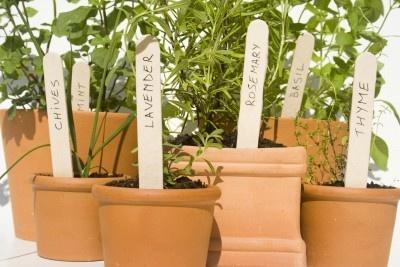 erbe aromatiche - orto sul balcone