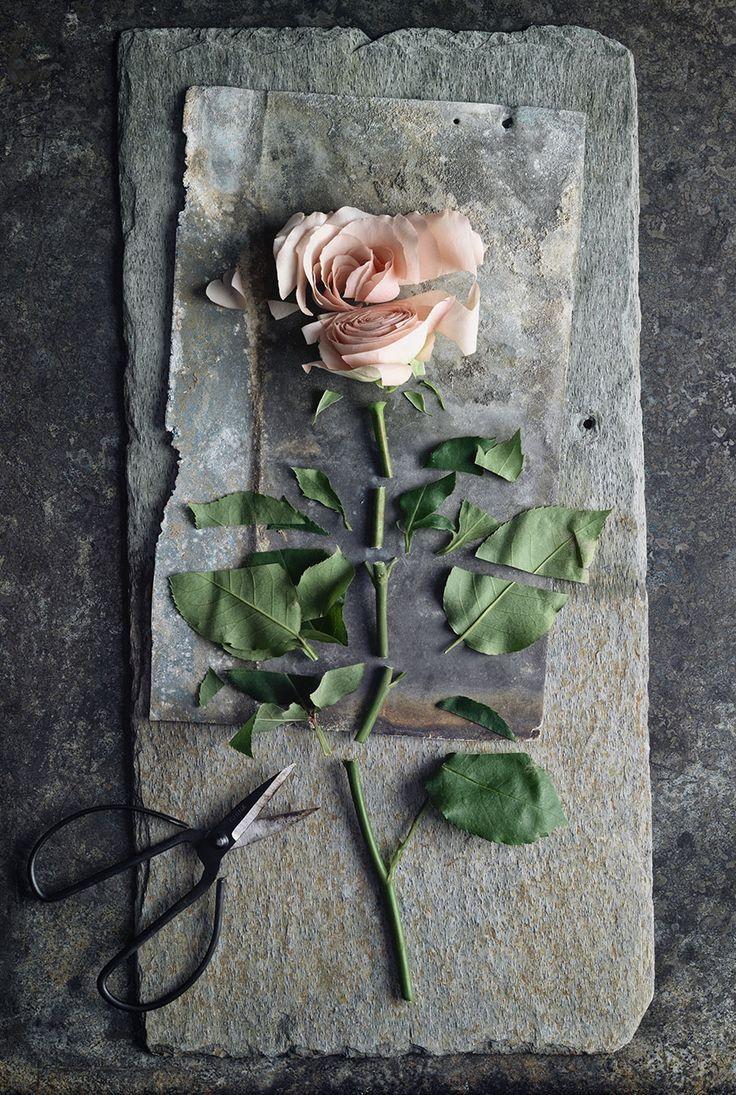 """""""Dobbiamo rinunciare a cogliere una rosa, per timore che la sua spina ci ferisca?""""  Arthur Schopenhauer"""