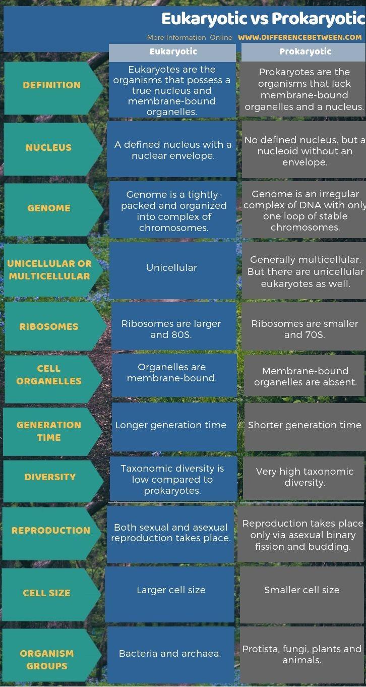 Difference Between Eukaryotic And Prokaryotic 3 Autonomic Nervous System Molecular Prokaryotes