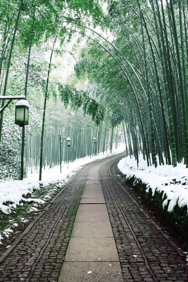 Bamboo path covered in snow in Japan.