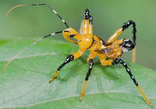 farmapest katil böcek ile ilgili görsel sonucu