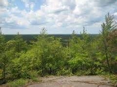 ottawa forest - Ecosia