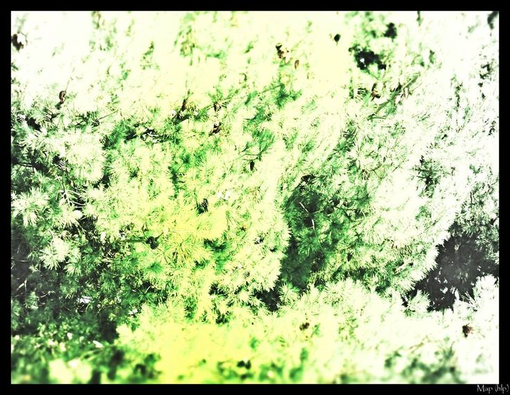 The green man...
