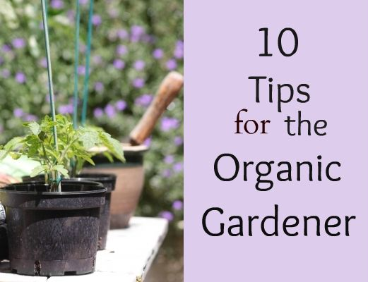 Don't have a yard? Try Container gardening! Here are 10 Tips to