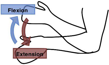 flexion y extencion del cuerpo Técnicamente, flexión y extensión son movimientos realizados alrededor de un eje coronal en el plano sagital (es decir, en dirección anterior y posterior). La flexión es un movimiento en dirección anterior y posterior