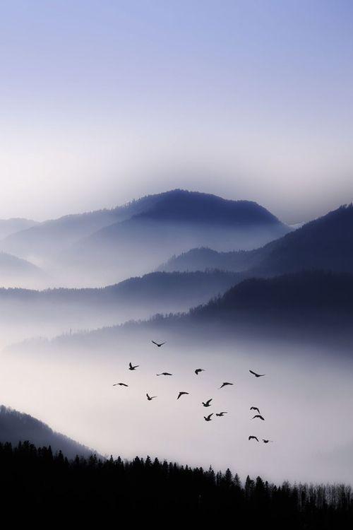 bird, mountains, and nature resmi