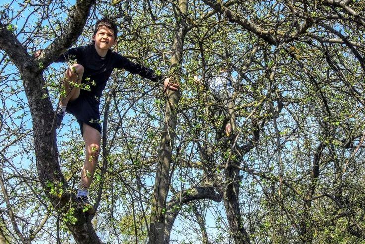 <p>Klimt je kind regelmatig in een hoge boom? Of balanceert hij of zij graag op gevaarlijke randjes? Hou je regelmatig je hart vast?Dan ben je niet de enige ouder.Kinderen houden van gevaarlijk spel. Ze houden van ontdekken en uitproberen. En…</p>