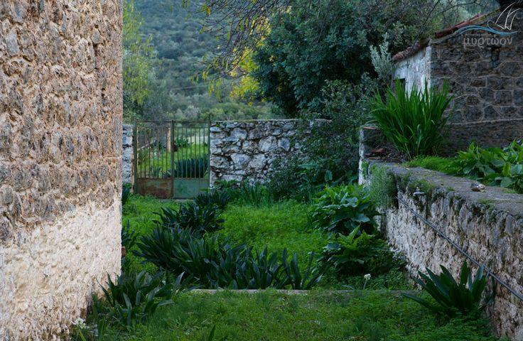 Shades of green at Poulithra. www.myrtoon.gr  #Myrtoon #Poulithra #Leonidio #Greece #traditional #garden Photo © Vicky Lafazani