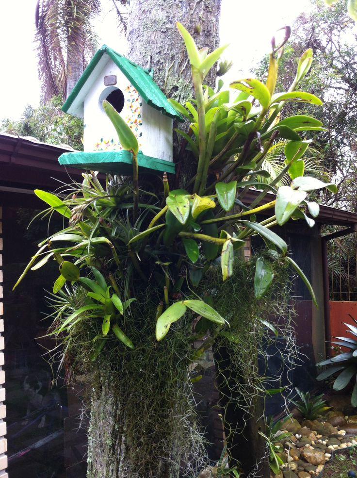 Mejores 35 imágenes de nosso quintal en Pinterest   Amo, Primavera y ...