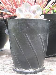 UBeauty Pots and Plants: Recycled tyre pots