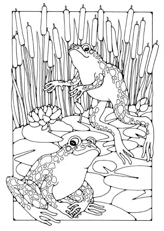 frogs colouring page free edupics