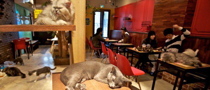 Berlino apre le porte ai Cat Cafè