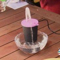 Para brincar e beber: saiba como fazer uma fonte de água para seus gatos