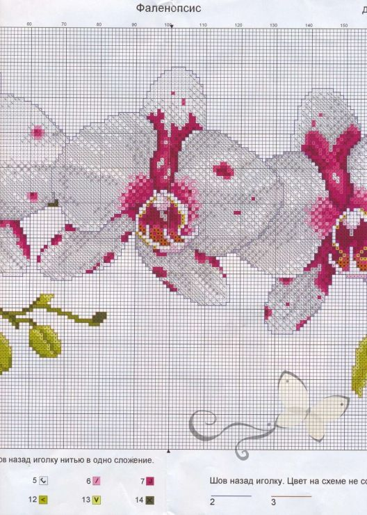Gallery.ru / Фото #11 - Цветы - oksiakshn