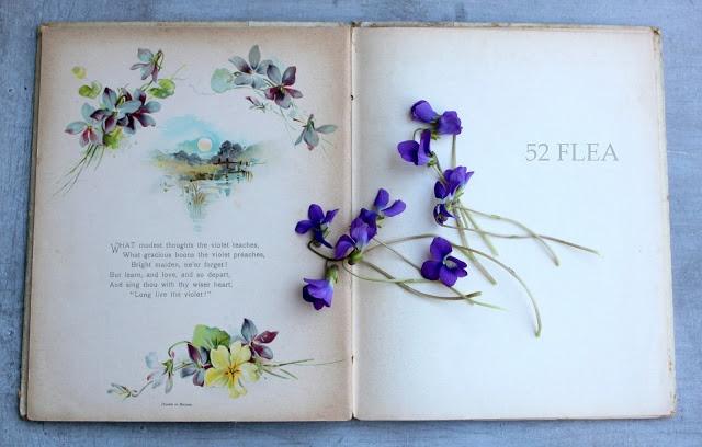 52 FLEA: Violets To Greet You