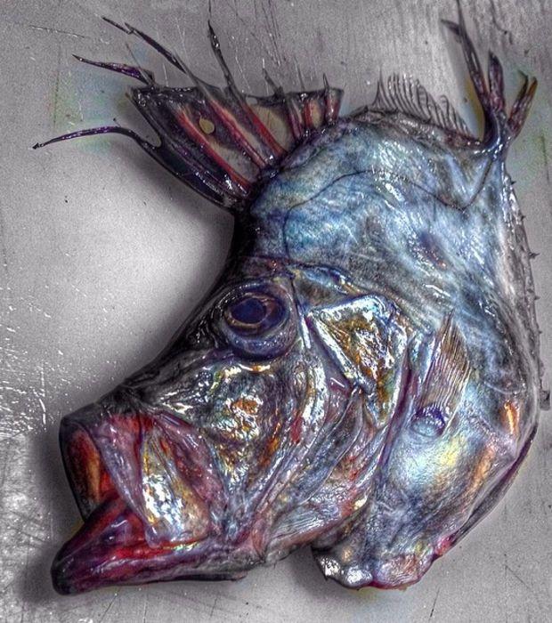 Certains poissons arborent des caractéristiques assez étonnantes