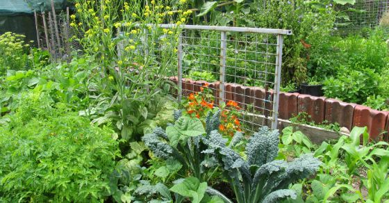 What if I told you that you can start an edible garden that will continue to produce food year after year with very minimal maintenance, monitoring, and no sowing after the first year (unless you want to diversify). It's vital that you...