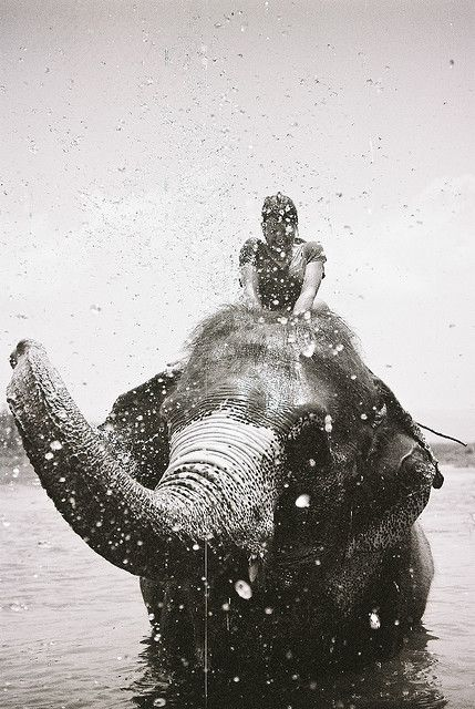 one day I am going to ride an elephant and it's gonna be fantastic.