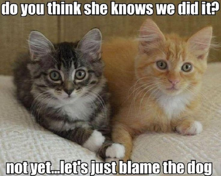 Pin by Deanna Lynn on cats Funny cat photos, Kittens