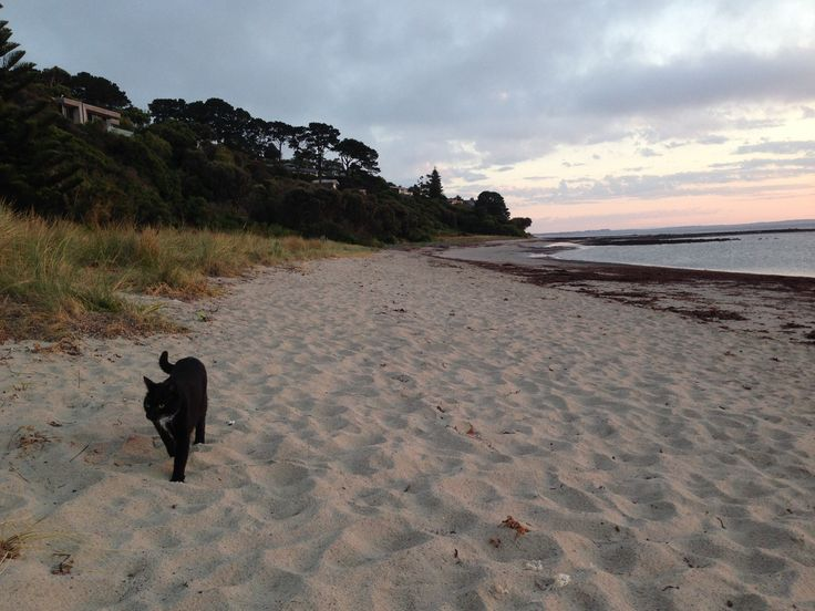 Sammy's expedition.  It's a leash free beach, so he figured it was OK....