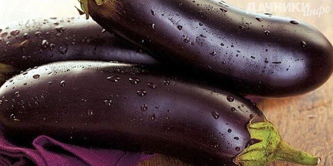 Выращиваем здоровые баклажаны - Подробности: http://dachniki.info/vyrashhivaem-zdorovye-baklazhany-3236.html