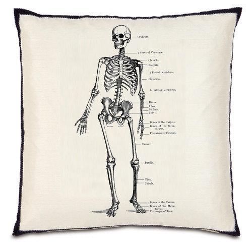 45 best human | inspirational anatomy images on pinterest | human, Skeleton
