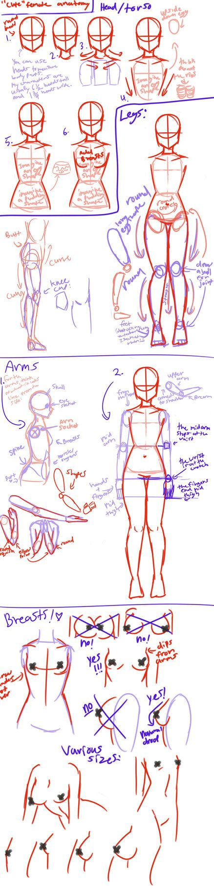 """Cute"" female anatomy tutorial by AngelicCarrot on deviantART"