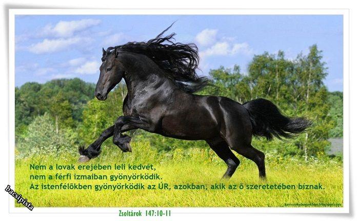 Nem a lovak erejében