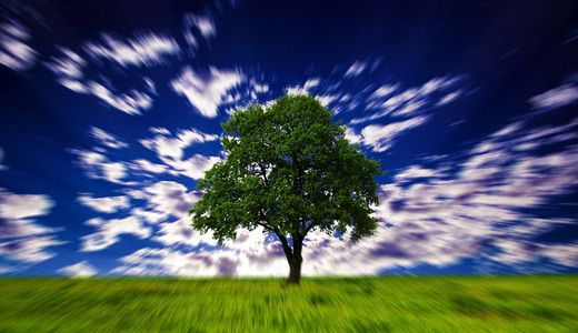 Árboles ilusión óptica Hypnotic descarga gratis fondos de pantalla de alta resolución de alta resolución