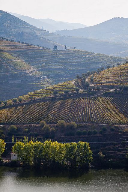 Rio Douro Vineyards, Portugal