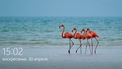 Тупик.Ru: #Розовые_фламинго*