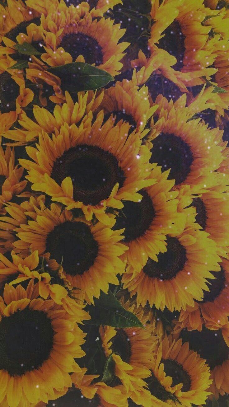 tumblr yellow aesthetic flower wallpaper tumblr yellow aesthetic flower wallpaper