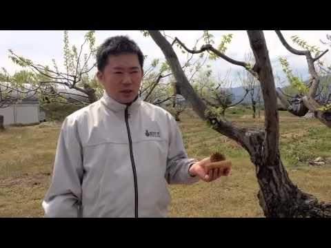栗きんとんと和スイーツ新杵堂 - YouTube