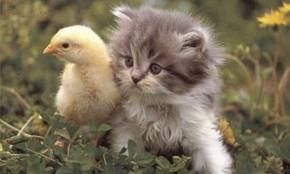 Curiosa amistad