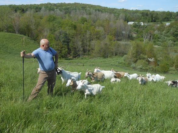 MicKel Farm Kiko Goats, Your premier breeder of Kiko Goats in New Waterford, OH.