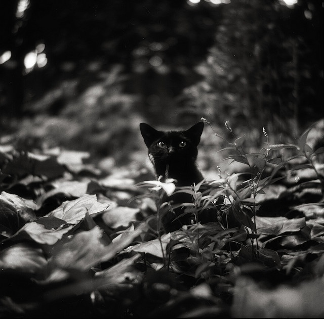 Beautiful Black CATS (ᵔᴥᵔ) by Tommy Oshima (photographer)
