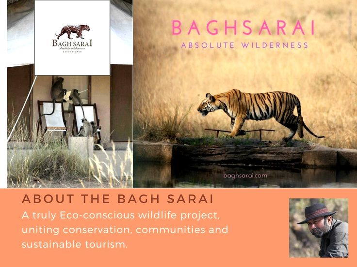Conservation is the principle that guides all our actions at Bagh Sarai. We believe in sustainable development and usage of eco-friendly products only. #BaghSarai #Bandhavgarh #NationalPark #nature #junglesafari #tigersafari #wildlife #luxury #travel #wanderlust   #junglediaries #wildcats #wildlifephotography #getaway #gamedrive #tiger #bushdinner #madhyapradesh #incredibleindia